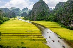 Созрейте прокладки риса с обеих сторон потока внутри природного заповедника Tam Coc, Ninh Binh pro , Вьетнам Стоковые Изображения