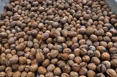 Созретые плодоовощи грецкого ореха в раковине Стоковые Изображения RF