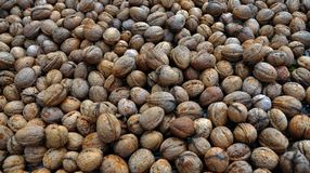 Созретые плодоовощи грецкого ореха в раковине Стоковое Фото