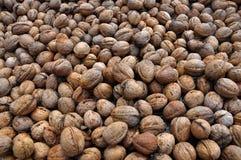 Созретые плодоовощи грецкого ореха в раковине Стоковая Фотография