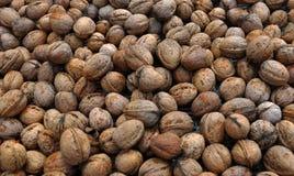 Созретые плодоовощи грецкого ореха в раковине Стоковые Изображения