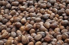 Созретые плодоовощи грецкого ореха в раковине Стоковые Фото