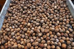 Созретые плодоовощи грецкого ореха в раковине Стоковое фото RF