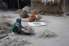 Создатель риса стоковые фотографии rf