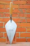 соколок Стоковая Фотография