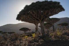 Сокотра, остров, Индийский океан, Йемен, Ближний Восток Стоковое Изображение