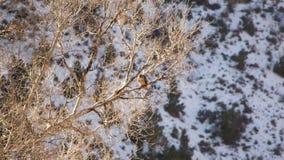 Сокол в дереве Стоковые Изображения RF