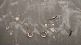 Сокровища залива Стоковые Фотографии RF