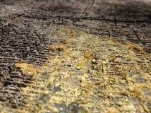 Сок дерева Стоковая Фотография RF