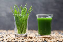 Сок травы пшеницы Здоровое и органическое питье утра Тенденция вытрезвителя, фитнеса и superfood Стоковое Изображение RF