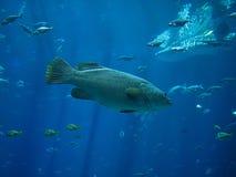 соленая вода рыб Стоковое Изображение RF