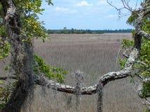 Соленое болото обрамленное испанским мхом Стоковые Фотографии RF