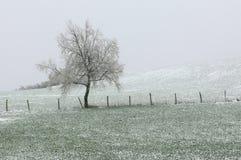 солитарная зима вала стоковая фотография rf