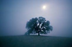Солитарный вал дуба в тумане Стоковое Фото