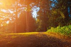 Солнечная дорога в лесе Стоковые Изображения RF