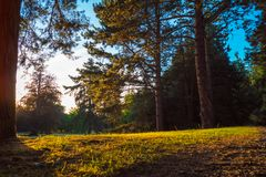 Солнечная дорога в лесе Стоковое Фото