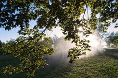 Солнечний свет в утре Стоковое Изображение