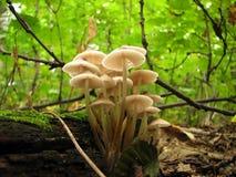 солнечний свет гриба семьи Стоковое Изображение