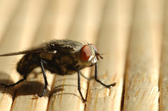 солнечний свет мухы вниз Стоковые Фотографии RF