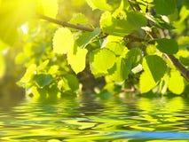 солнечний свет осины стоковые фото
