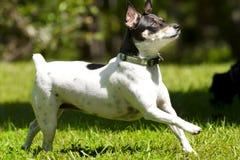 солнечний свет собаки идущий стоковые изображения rf
