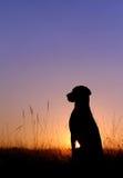 солнечний свет Стоковые Фотографии RF