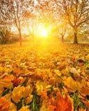 Солнечное листво осени Стоковое фото RF
