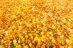 Солнечное листво осени Стоковые Изображения RF