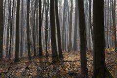 Солнечность в туманном лесе Стоковая Фотография RF