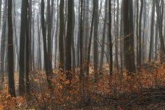 Солнечность в туманном лесе Стоковые Фото