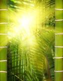 солнечность джунглей Стоковое Изображение RF