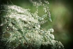 солнечность зеленого завода dewdrop стоковые изображения