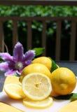 солнечность лимонов стоковые фото