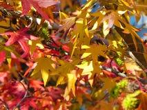Солнечность листьев осени предпосылки красочная Стоковое Изображение