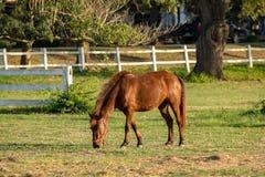 Солнечность на хранят лошади в, который Стоковые Изображения RF