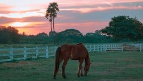 Солнечность на хранят лошади в, который Стоковое Изображение RF