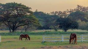 Солнечность на хранят лошади в, который Стоковое Фото