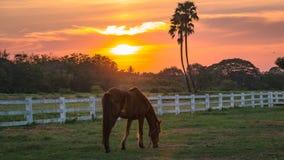 Солнечность на хранят лошади в, который Стоковая Фотография