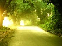 Солнечность утра на пути стоковое фото rf