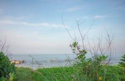 Солнечность цветка моря стоковые фото