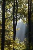 солнечность Стоковые Изображения