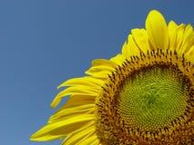 солнечно Стоковое фото RF
