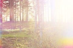 солнечные древесины Стоковые Фото