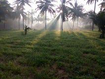 Солнечные лучи на зеленом травянист-поле в утре осени стоковая фотография rf
