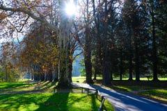 Солнечные лучи приходя через ветви деревьев осени в Швейцарии стоковые изображения rf