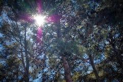 Солнечные лучи через ветви стоковые фотографии rf