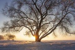 Солнечные лучи через дерево на снежном луге на заходе солнца красивейшая зима космоса места экземпляра Желтый солнечний свет Дере стоковые фотографии rf