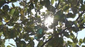 Солнечные лучи через деревья видеоматериал