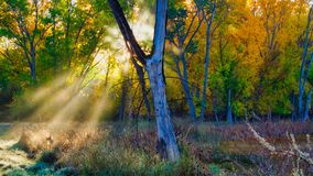 Солнечные лучи через туман осени стоковое изображение rf