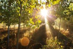 Солнечные лучи Стоковые Фото